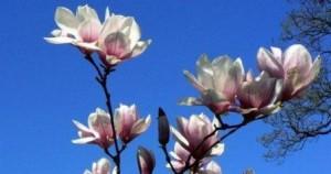 21 Mart Nevruz