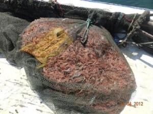 balık ağları